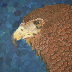 Brown eagle with blue circle background