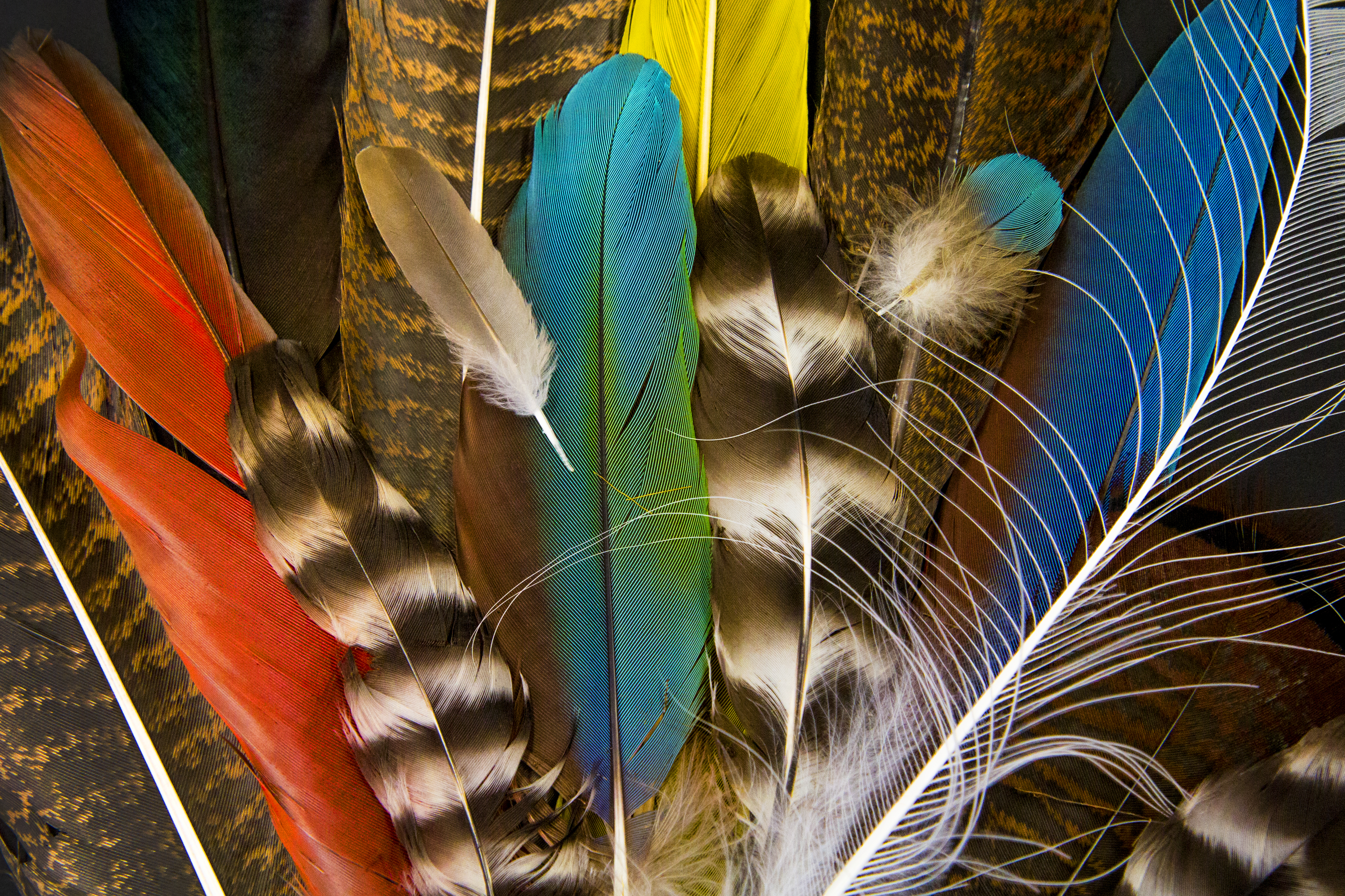 feathers monthly challenge feb 2017