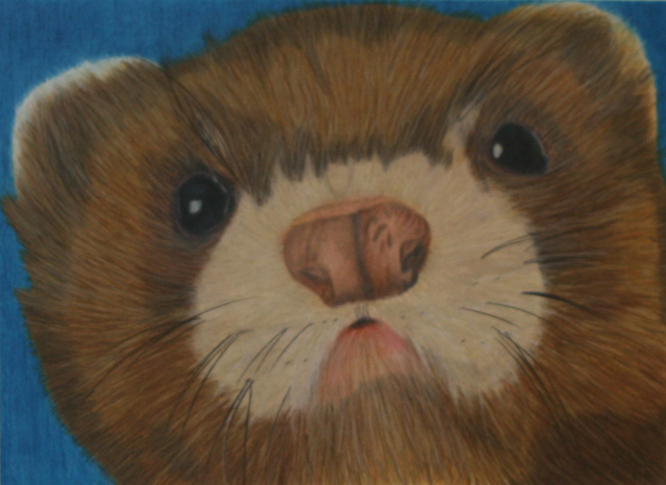 ferret face closeup