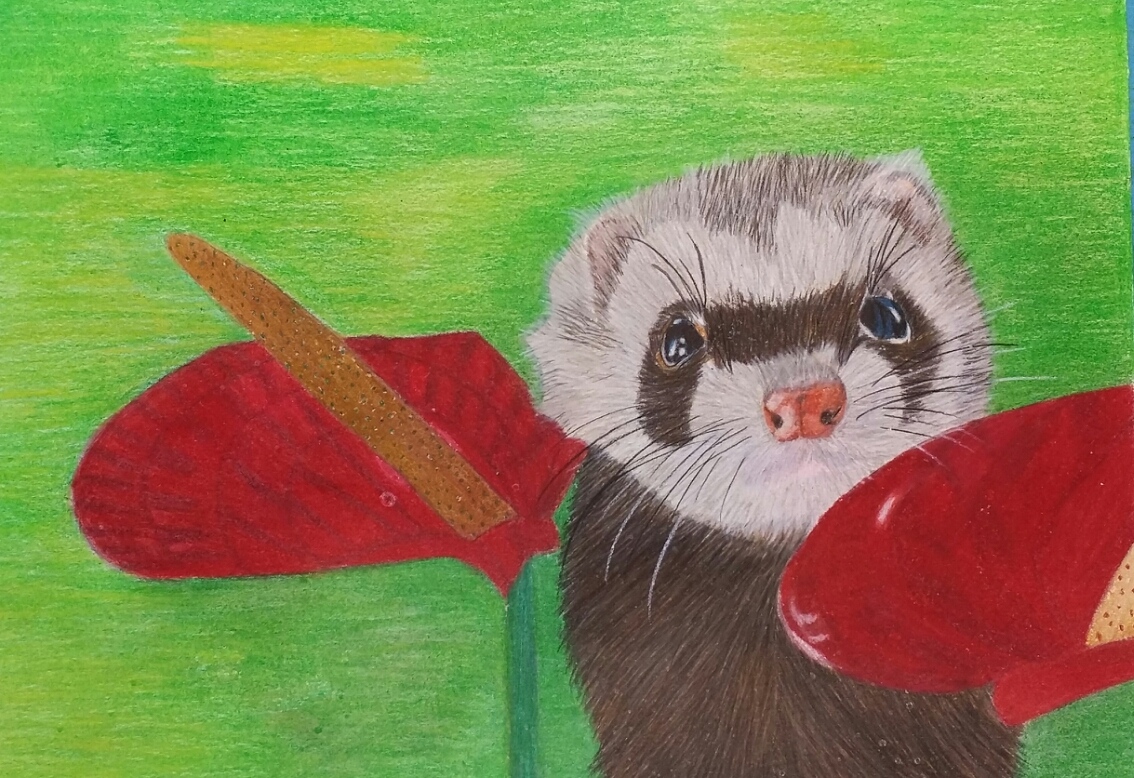 ferret with red flowers
