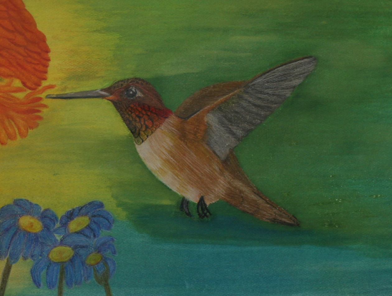 hummingbird over blue flowers drinking from orange flowers