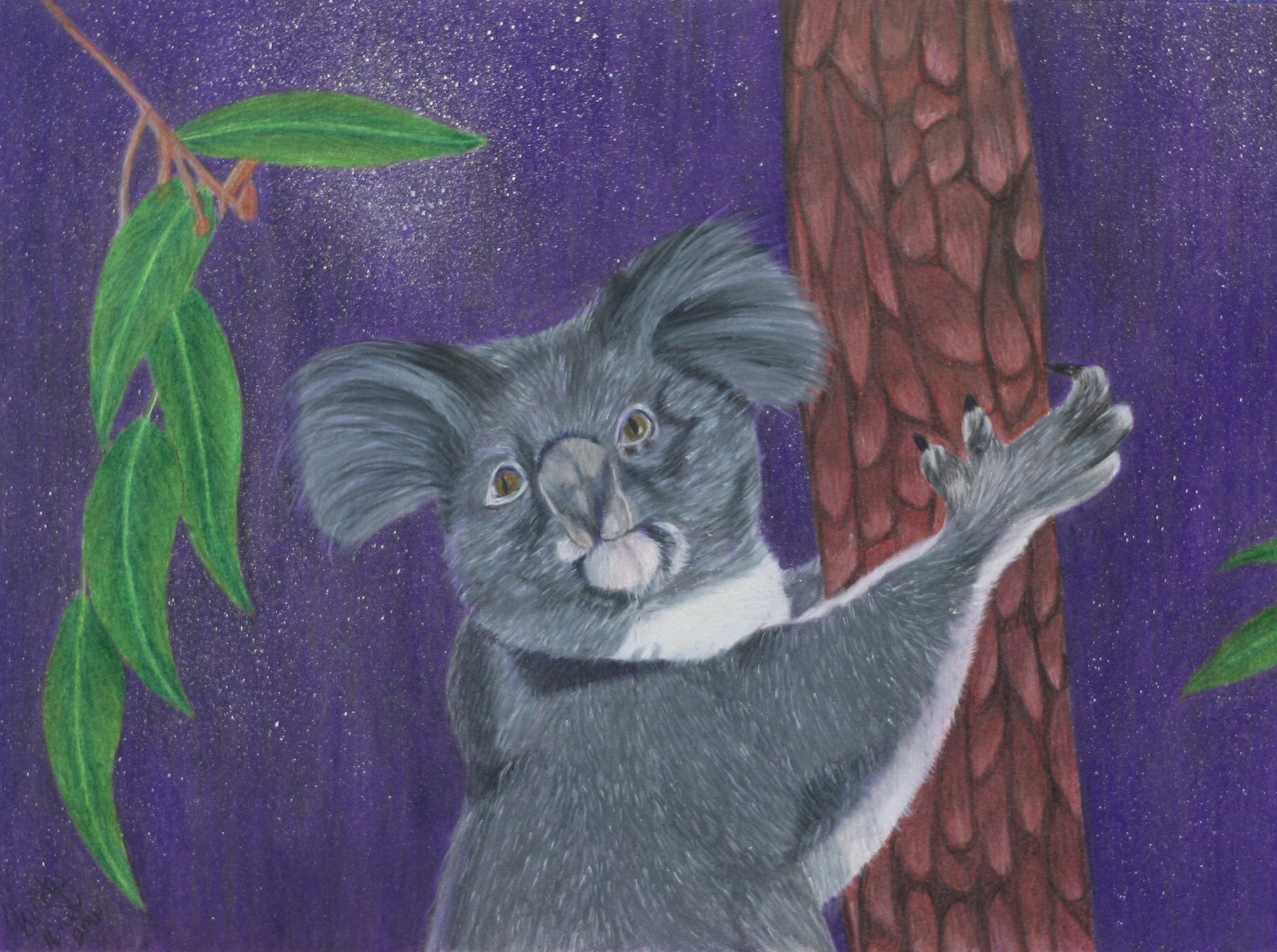 koala colored pencil nov 2016