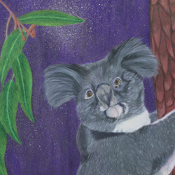 colored pencil drawing of a koala bear