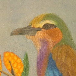 Lilac breasted roller, colored pencil drawing