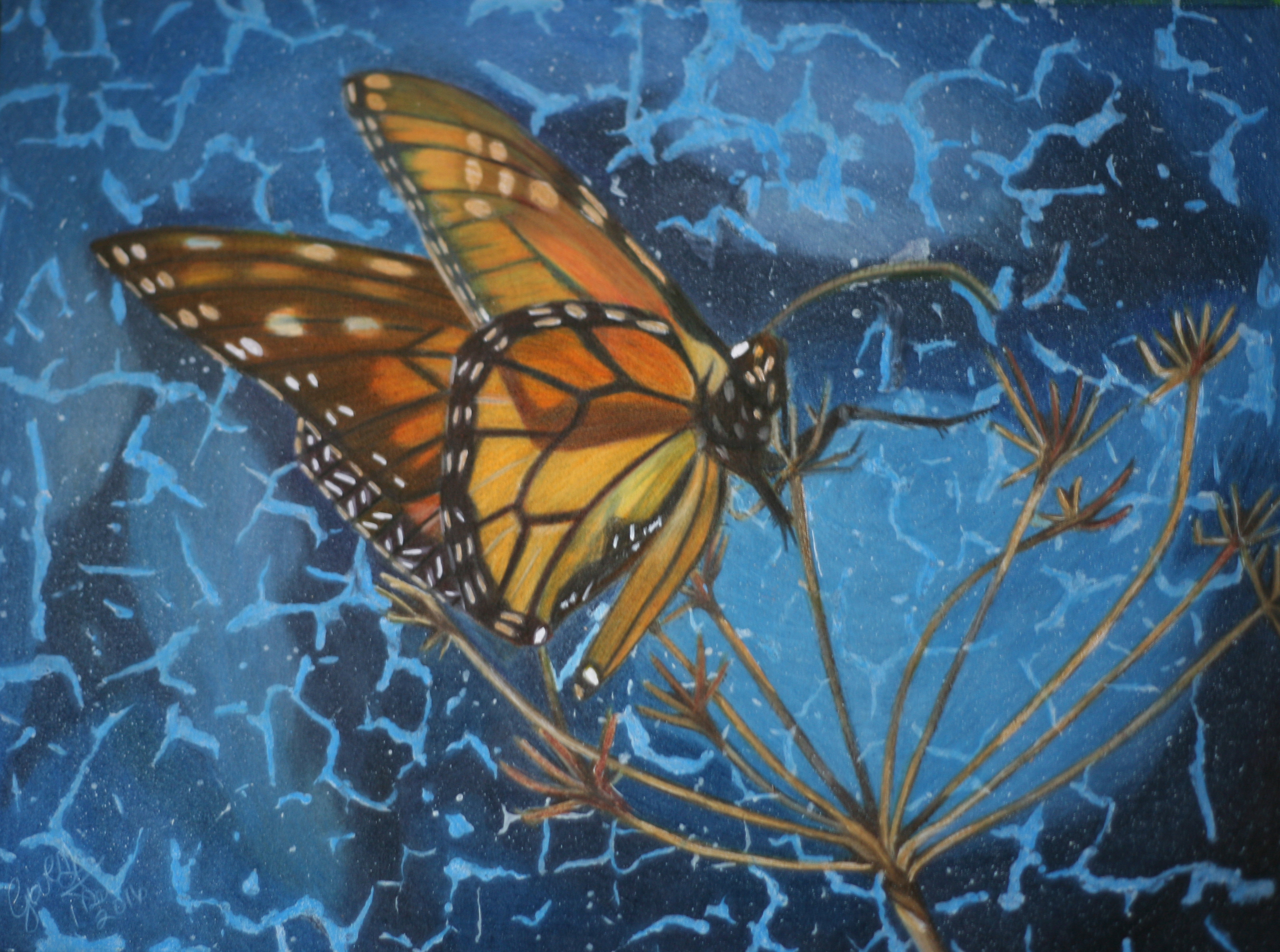 Monarch Butterfly Colored Pencil Drawing