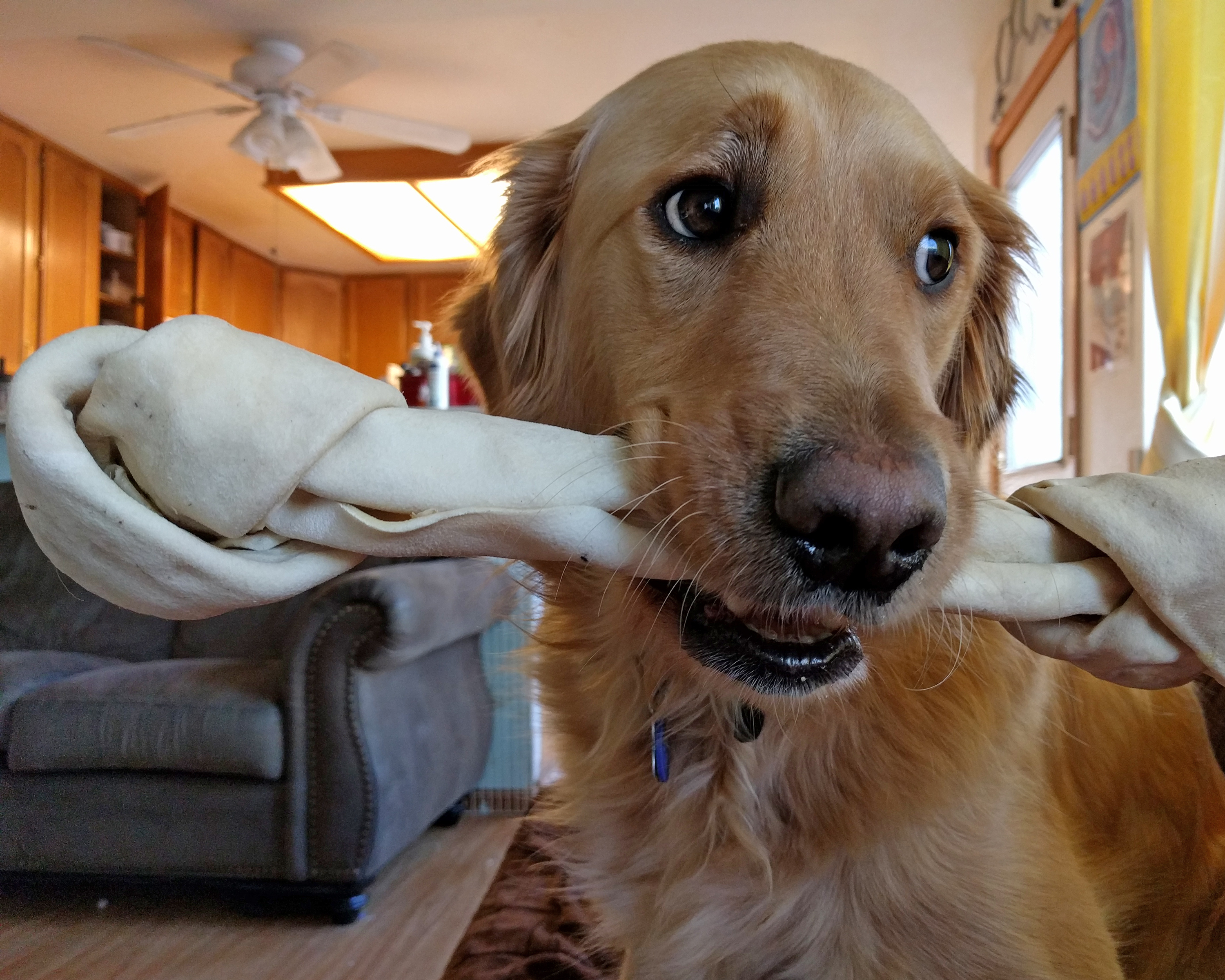 Casper and his bone